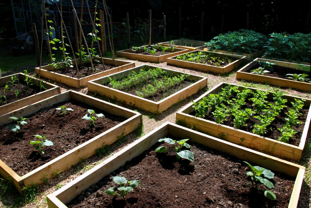 simple-vegetable-garden-designs-and-simple-home-vegetable ...